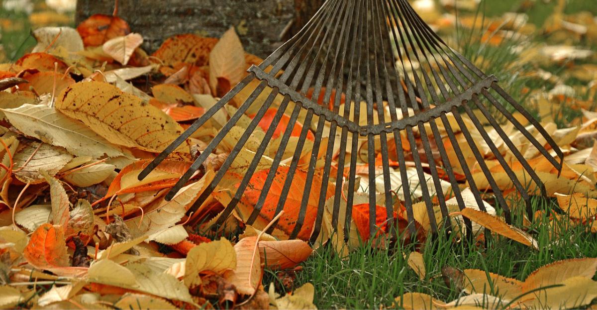 Fall Gardening Tips From The Dallas Arboretum Landon Homes